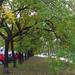 őszi fasor