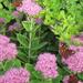 őszi zsongás virágon2