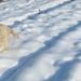 Buksi a friss hóban