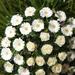 066./ 40 szálas vegyes koszorú 30 gerbera + 10 rózsa