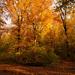 Őszi délután