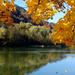 ősz/behajló