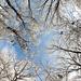 Album - Mátra télen