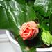 növények 019