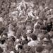 LGT koncert, Tabán - 1987. május 1.