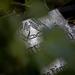 A kert - Szigetváry Zsolt MTI/külsős