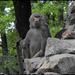 Kecskemét vadaspark 060