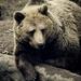 Gyűjtemény - Medvék