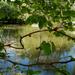 Tavaszi tó