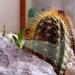 kaktusz01