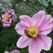 kísérletek, kerti harmónia